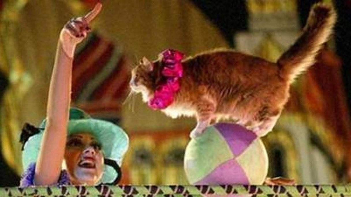 Dospievajúci mačička filmy