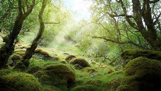 Mimoriadne vzácny Badínsky prales...