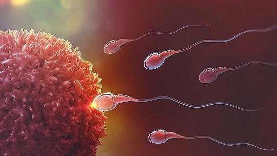 Prelomový objav: Spermie sa pohybujú úplne...