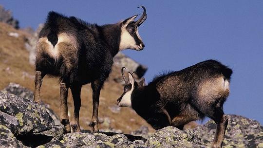 KVÍZ Poznáte dobre zvieratá Slovenska?