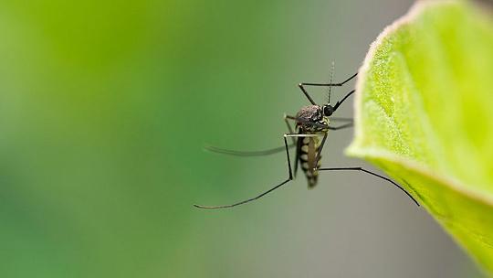 13 otázok a odpovedí o premnožení komárov....