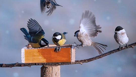 Vedeli ste, že kŕmidlo pre vtáky by sa malo...